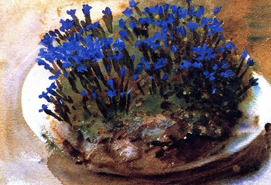 Blue Gentians, 1905 john singer sargent