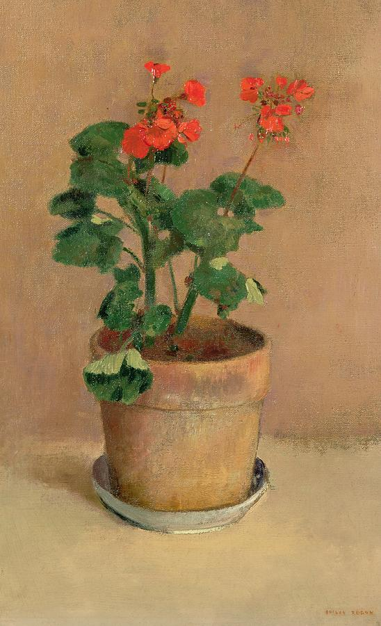 Un vaso di gerani