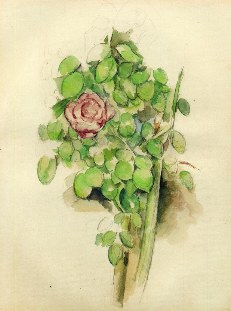 Cespuglio di rose Paul Cézanne