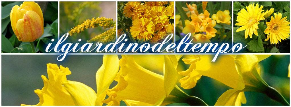 Fiori gialli collage
