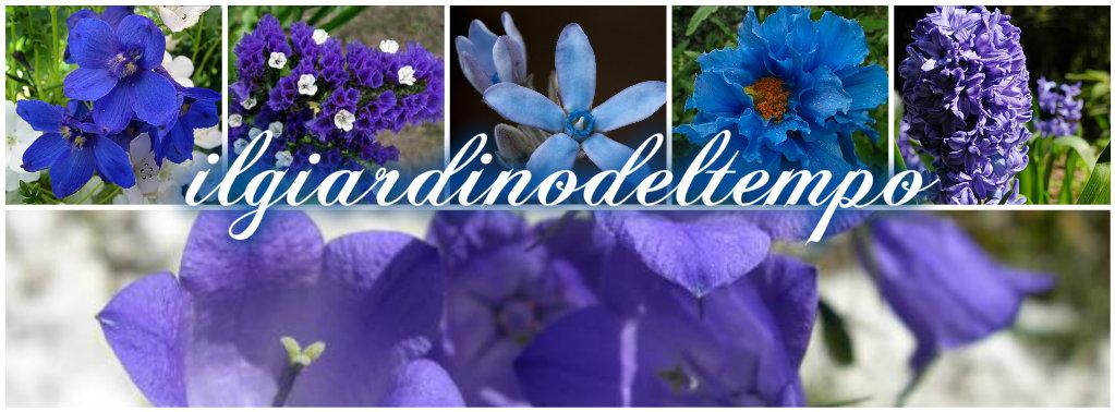 Fiori blu collage