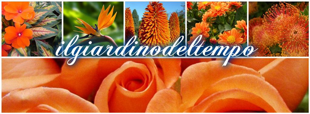 Fiori arancioni collage