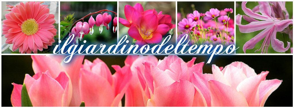 Fiori rosa collage