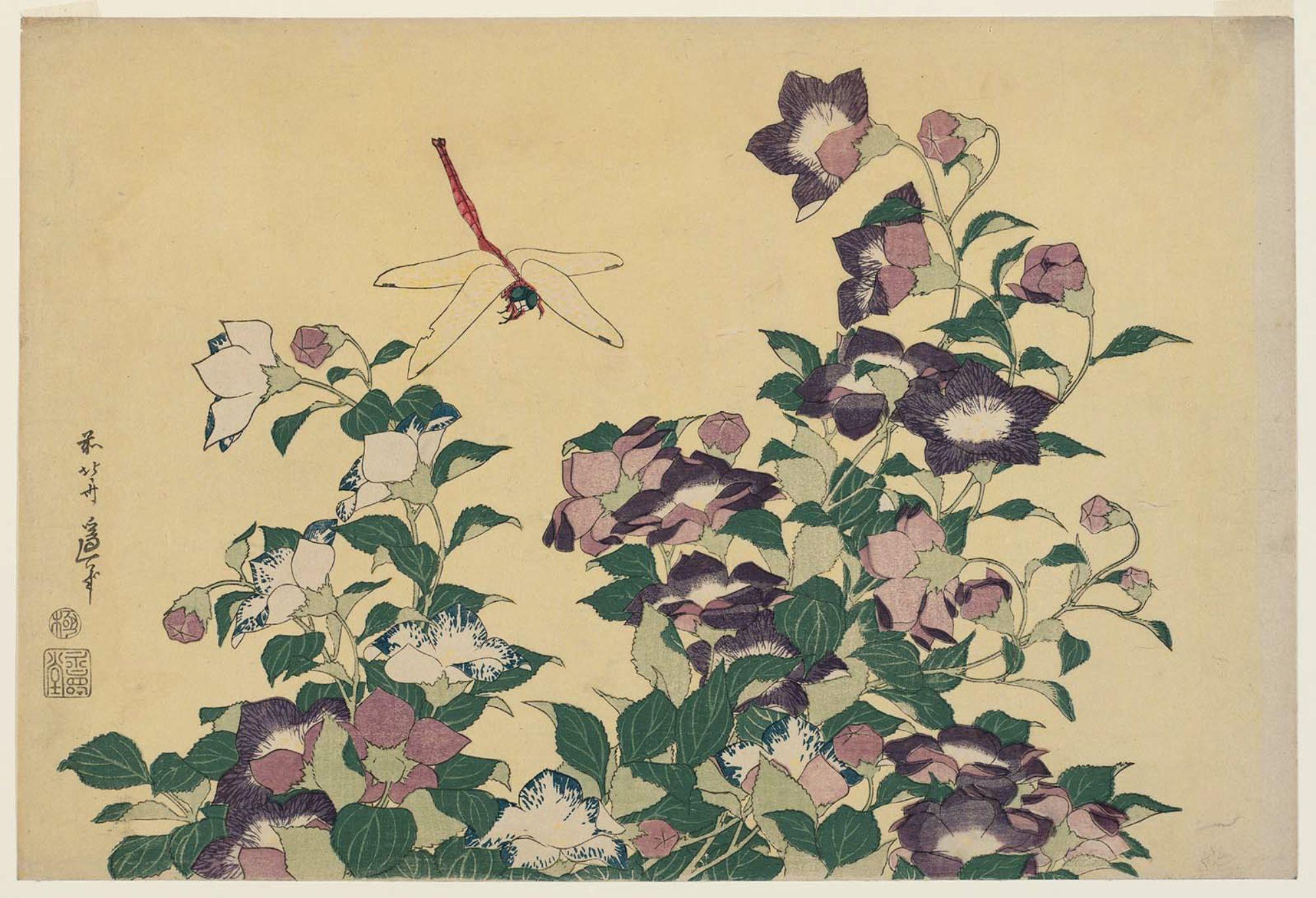 Bellflower and Dragonfly (Campanula e libellula), Katsushika Hokusai