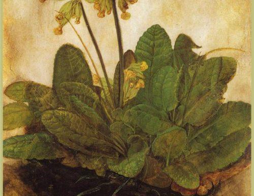 Albrecht Dürer – Tuft of cowslips