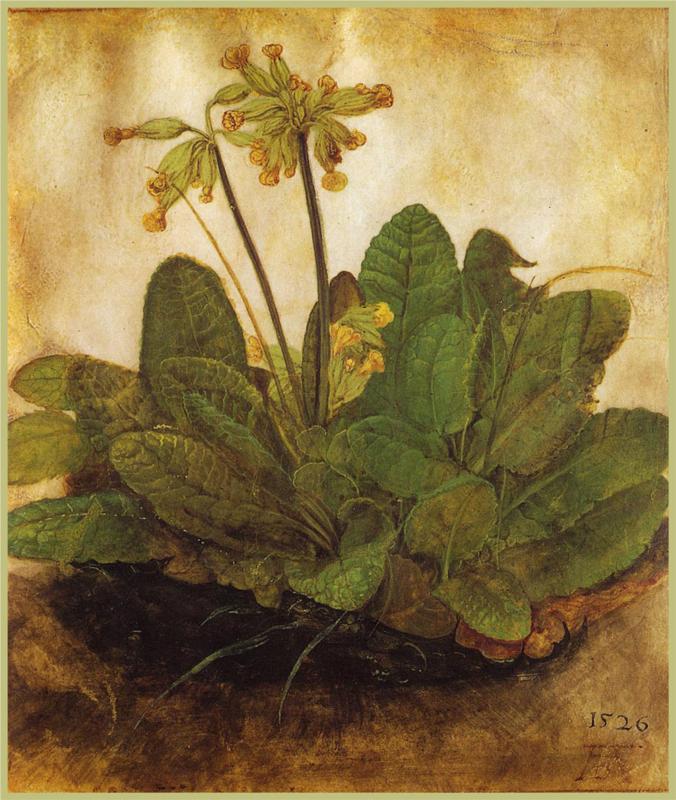 Tuft of Cowslips (Ciuffo di primule), Albrecht Dürer