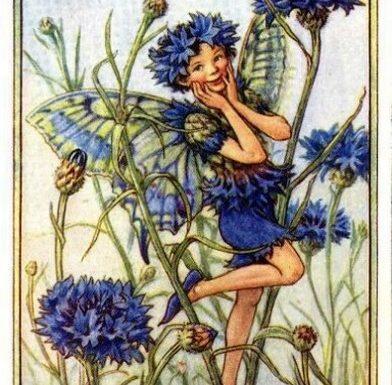 Fate dei fiori: Fata del fiordaliso