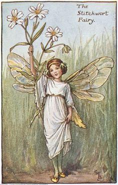 The stitchwort fairy - Fata della stellaria/centocchio comune