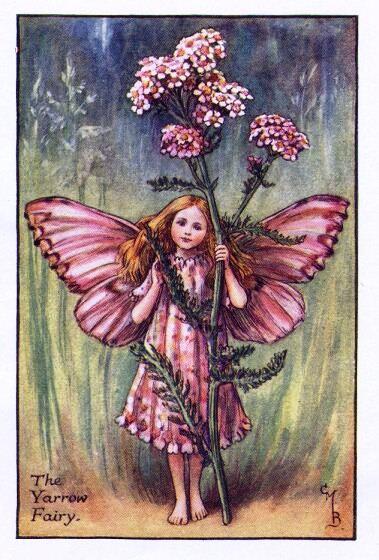 Fate dei fiori: Fata dell'achillea