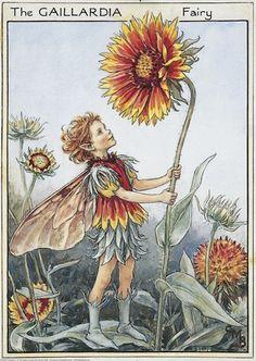 The gaillardia fairy - La fata della gaillardia; Cicely Mary Barker