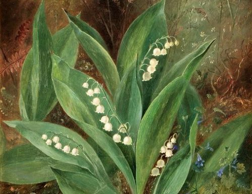 Lily of the Valley di Albert Dürer Lucas
