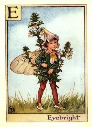 Fata dell'eufrasia - The Eyebright Fairy; Cicely Mary Barker