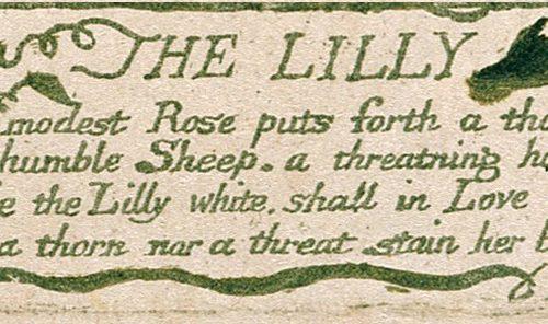 Il giglio di William Blake