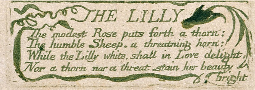 the lily william blake